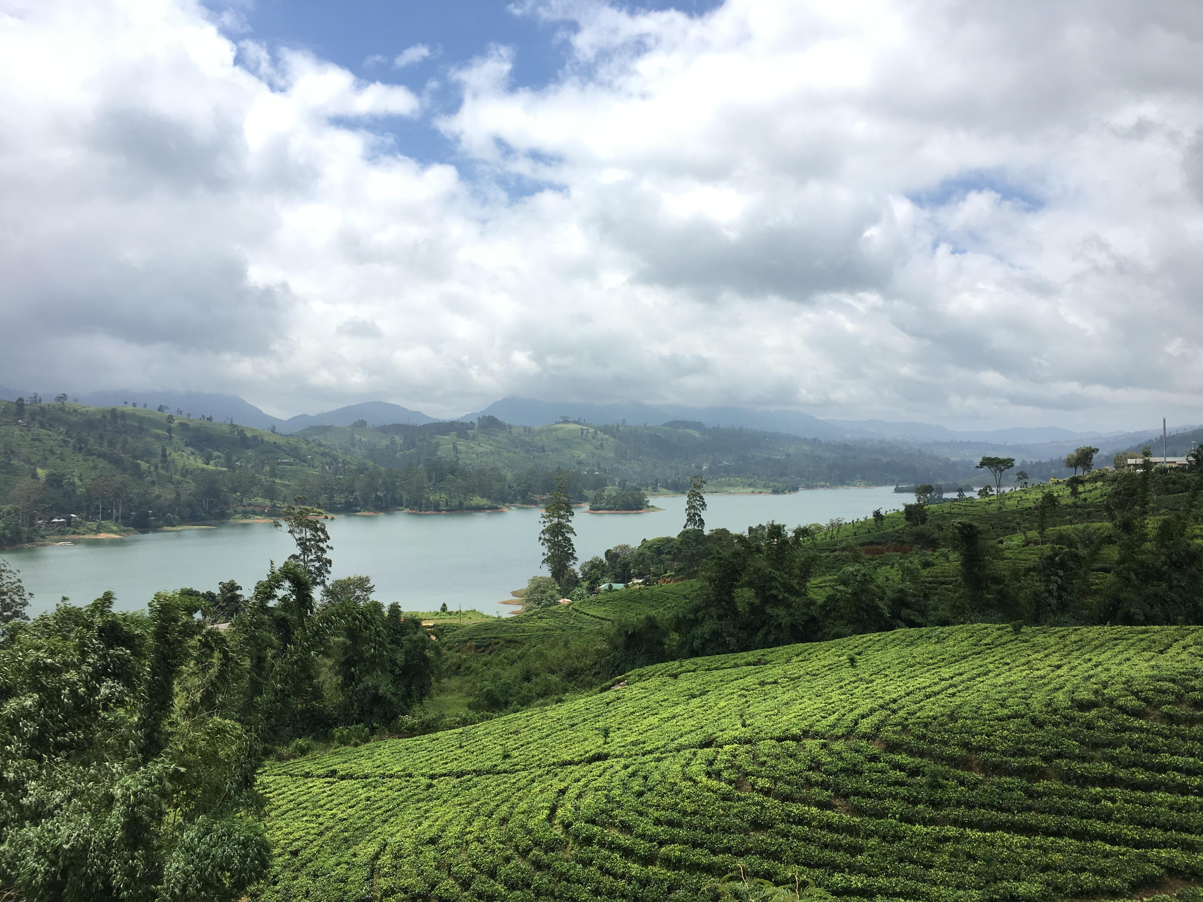 Tea Country Sri Lanka