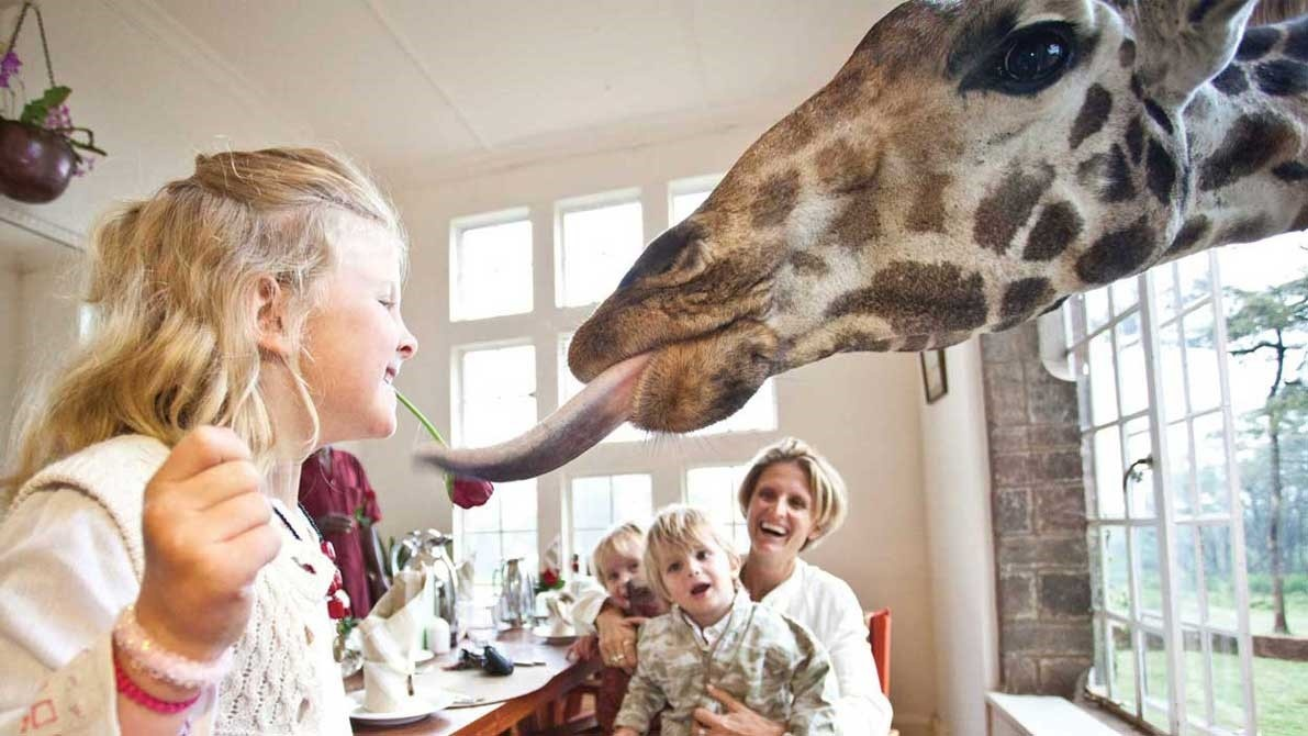 giraffe vacation ideas