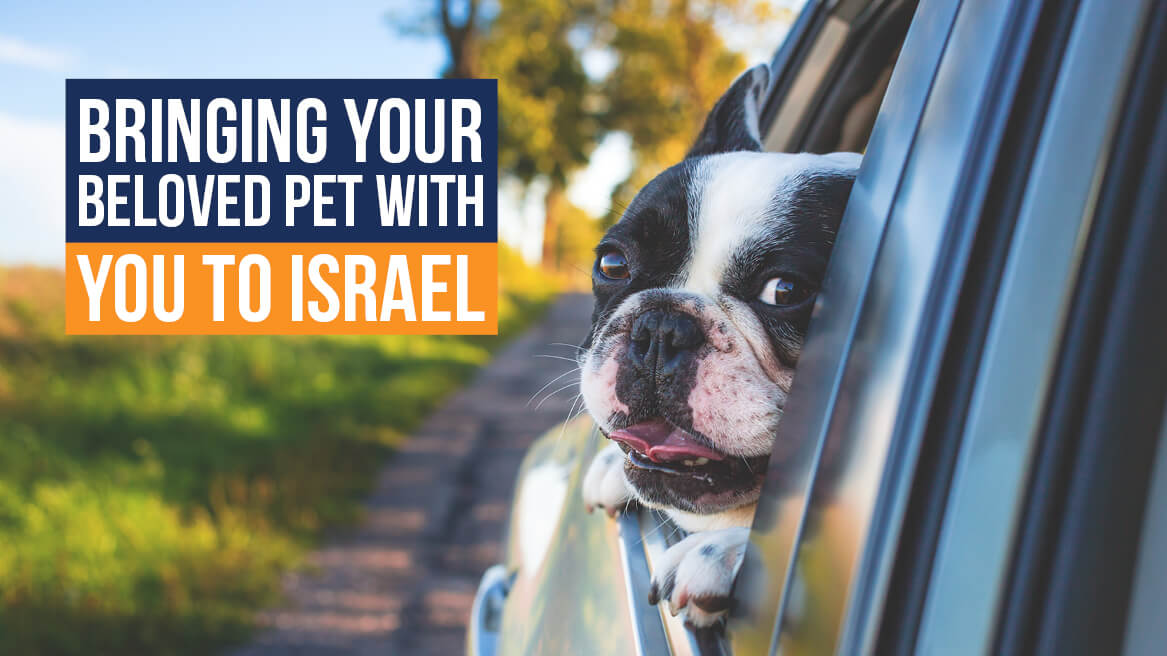 Bringing Your Beloved Pet with You to Israel header