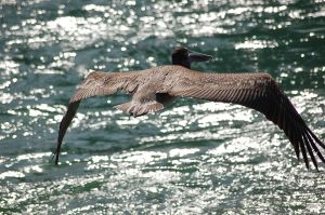 Fly, fly away!